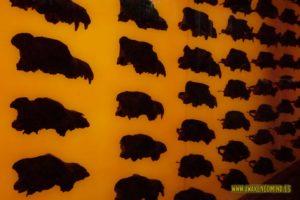 brea, tar pits, la brea, lobos, wolves, museum, museo, los angeles, eeuu, viajes, lugares, que visitar, que ver,